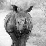 Kifaru Safari