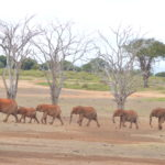 East African Expeditions