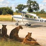 Serengeti Fly-in Safari